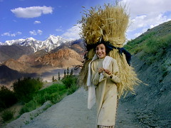Explored! Girl @ Golook - Chitral, Pakistan (Amina T.) Tags: trees pakistan snow green girl smile high village path altitude wheat country farming competition bluesky shy nikond50 valley bbc 423 nwfp awardwinning morder chitral hindukush golook bunizoam chitralvalley samsungdigimaxv3 explored14may2008