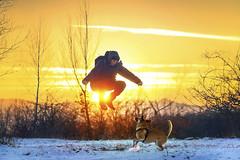 One more jump till spring! (petrapetruta) Tags: jump joy dog sunset winter light sun february sky sonya7
