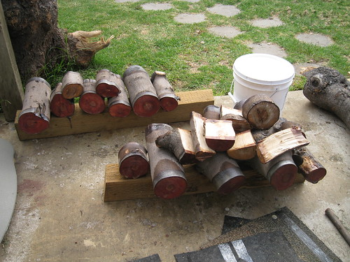 Anchorsealed European olive logs and natural-edge bowl blanks