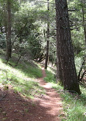 Helen Markt Trail Photo