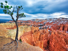Bryce Canyon , Sunset Point  - a hell of a place to lose a cow (janusz l) Tags: tree utah nationalpark bravo plateau canyon valley lone bryce rim hdr pinnacles pinnacle hoodoos sunsetpoint paria janusz leszczynski limberpine pinusflexilis paunsaugunt hellofaplacetoloseacow 001713
