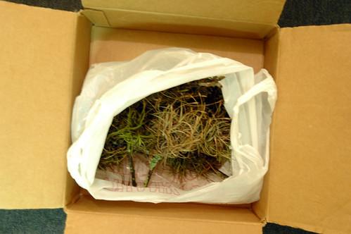 ball moss shipment