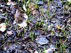 Early Life (Jorgelixious) Tags: chile life santiago grass early pasto finepix fujifilm growing crecimiento s5600