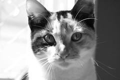 diarrhea feline
