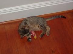 DSCF1238 (fadingembers) Tags: animals stormy kitties bigpurplehouse
