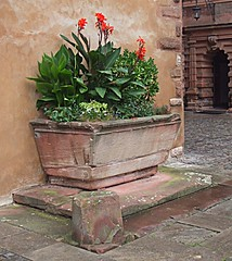 Aschaffenburg: Schloss Johannisburg: Courtyard (bill barber) Tags: flowers plants flower stone germany garden bayern deutschland bill sandstone arch pierre main decoration courtyard william palace plaster holes container pot ornament german elements barber alemania baroque planter schloss tyskland stein sandstein barock bundesrepublik casanova germania canna alemanha windowbox duitsland grs drainage deutsche aschaffenburg ornamentation piedra rivercruise photoshopelements lallemagne schlossjohannisberg spessart billbarber doitsu niemcy njemaka saksa nmetorszg arenisca njemacka  nemecko platinumphoto wdwbarber kreisfreiestadt williambarber peterdeilmann bbarber1 mscasanova germnia enoughroom plantsneeds