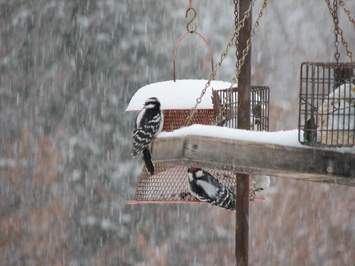 eating in the blizzard
