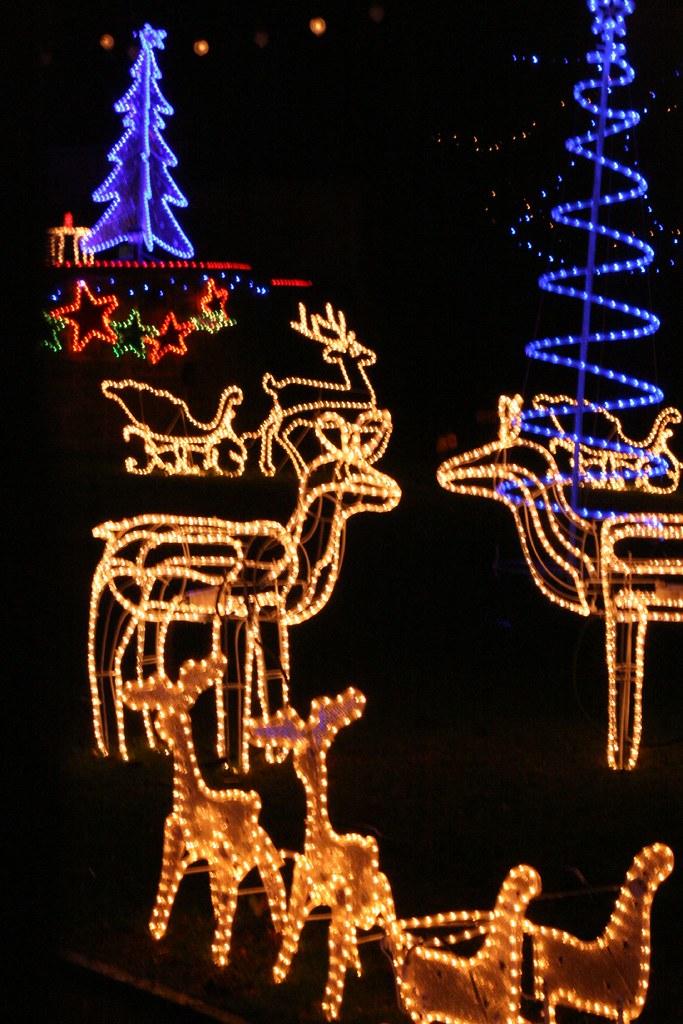 4 Jan 2007: Reindeer on the Lawn