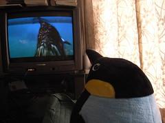 Penguin watches Nigel Marven (matsuyuki) Tags: stuffedtoy penguin stuffedanimal stuffedpenguin