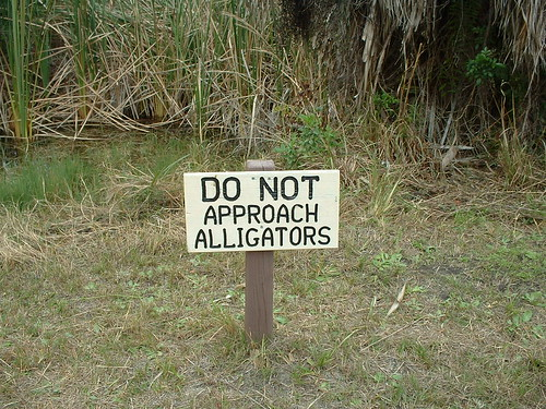 Do Not Approach Alligators