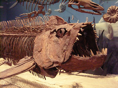 Xiphactinus and friend (cosraifoto) Tags: oklahoma museum skeleton fossil samsung norman herring xiphactinus samnoble nv10