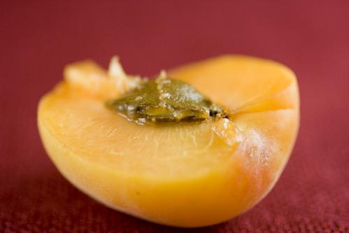 Apricot Plum