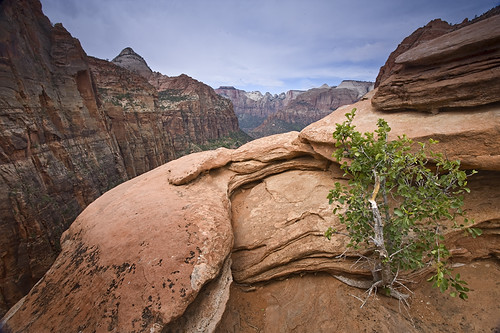Zion - Canyon Overlook