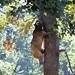 [Libearty Bear Sanctuary] Ours en Roumanie
