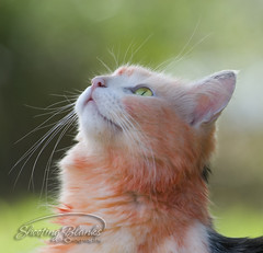 Here Birdie!! (KaTrina Blanks) Tags: portrait pet cats cute animal animals cat nc furry kitten chat fuzzy kitty northcarolina kittens gato cuddly furryfriday gatto ritratto gatti animale kedi portre chaton petportrait gattino poils hayvan carino irin gattini sevimli peloso kediler animaledomestico bulank pisipisi yavrukedi affettuoso evcilhayvan tyl camoments venerdpeloso momentidigatto ritrattodacompagnia tylcuma kedianlar hayvanportre