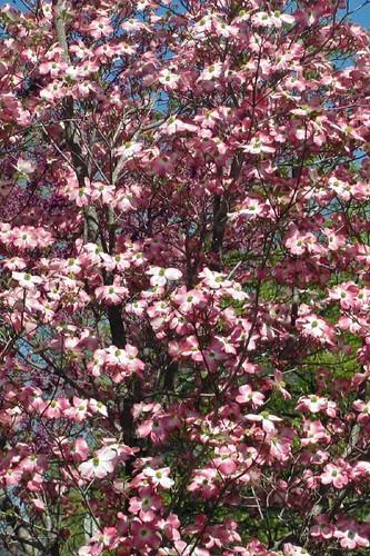 Spring In Mena 4