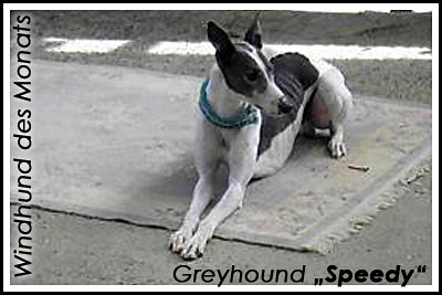 wdm-06-2011-greyhound-speedy