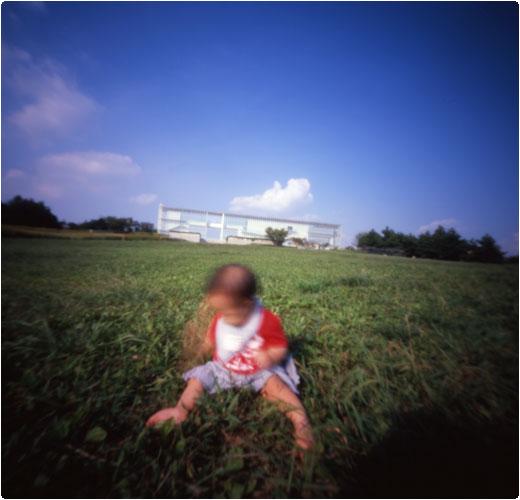 初めての芝生(2)