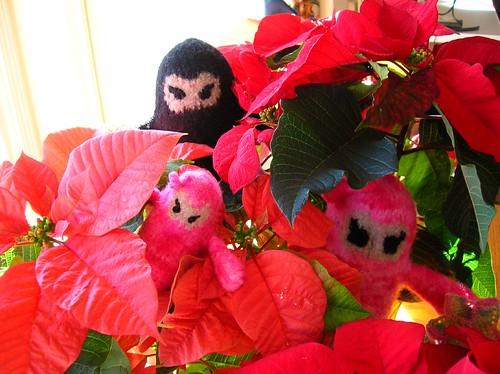 Ninja Family hiding in the poinsettas