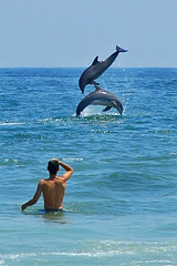 Dolphin Show (James Duckworth) Tags: ocean blue sky fish water flying dolphins outofthisworld flipping mywinners jimduckworth anawesomeshot impressedbeauty ultimateshot superbmasterpiece ultimageshot excellentphotographerawards theunforgettablepictures theunforgettablepicture tup2 jamesduckworth jamesduckworthphotography