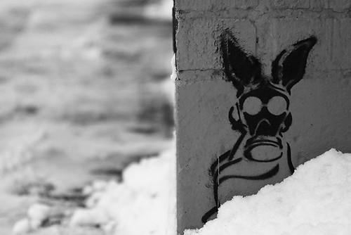 Snow Bunny 4662