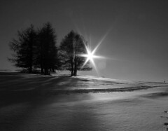 Behind the trees, the shinning star! (LilFr38) Tags: winter sun mountain snow france montagne grenoble soleil blackwhite 6ws hiver neige 1025favs noirblanc ancelle canoneos400drebelxti diamondclassphotographer flickrdiamond lilfr38 goldstaraward