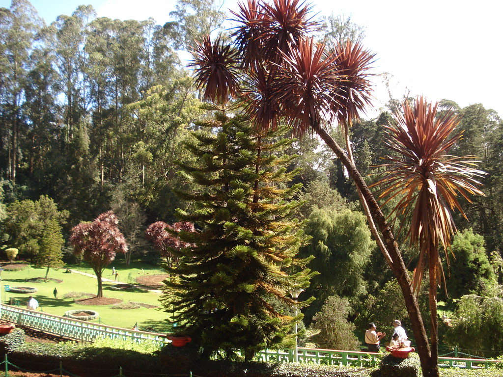 The World\'s Best Photos of garden and nilgiri - Flickr Hive Mind