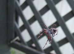 big spider 4