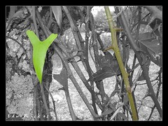 Cutout corazn (Edu Rickes) Tags: riograndedosul beautifulshots duetos brazilianphotographers fotgrafosbrasileiros brillianteyejewel todososdireitosreservados fotgrafosgachos eduardorickes edurickes pelotasfotoclube edurickesphotos belasimagens edurickesyahoocombredurickeshotmailcom fotgrafosdepelotas fotgrafosrs eduardomadrugarickes edurickesfotografia fotgrafosdoriograndedosul brazilianimages brazilphotographers edurickesproduesfotogrficas copyright2010 fotografiaslegais