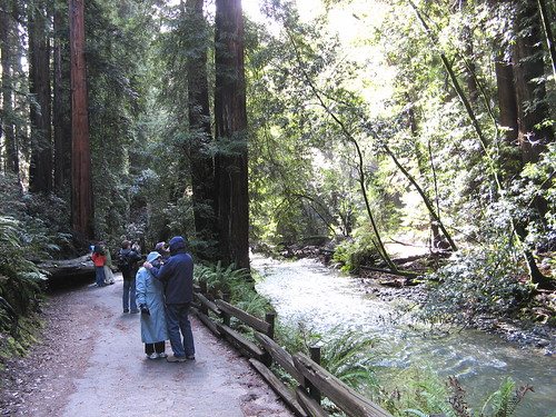 Muir Woods, main trail
