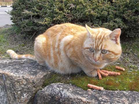 石舞台古墳の猫-01