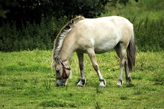 Are you a magic pony? (iwasfixin2) Tags: horse holland netherlands field europe archive thenetherlands meadow d100 horsey paddock