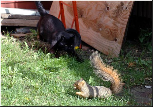 05/14/05 squirrel and Jebbie
