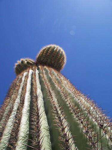 Cactus near Phoenix, Arizona