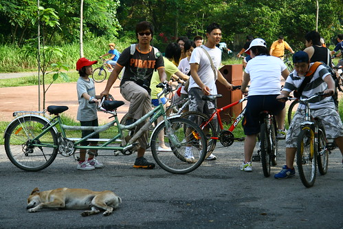 Dog sleeping in the middle of a race