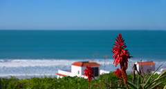 Ohne Titel (Janos Kertesz) Tags: blows blue landscape travel spain heaven cloud beach sea green beautiful each vacation andalusia skyline conildelafrontera costadelaluz