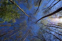 Bäume - treetops (Undertable) Tags: tree forest treetops wald bäume baum undertable wipfel assamstadt naturemasterclass