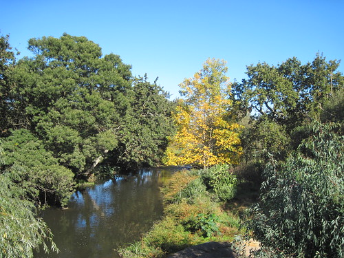 View of River From Bike Trail