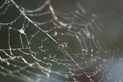Pajęczyna / Web by Rrrodrigo