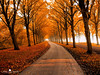 The Cook the Thief His Wife & Her Lover... (larsvandegoor.com) Tags: autumn fall netherlands amsterdam forest path lane amsterdamsebos 1000faves larsvandegoor aboveandbeyondlevel1