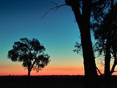 tree sunset 2 (dalinean) Tags: sunset tree sigma australia wa sd10 westaustralia mywinners treesubject