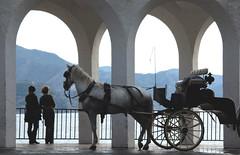(Juampa Mola) Tags: espaa horse luz caballo spain andalucia sur andalusia malaga nerja arcos smorgasbord galope frigiliana axarquia enganche ysplix