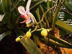 ortobotanico 069 (blum1) Tags: alberi fiori piante ortobotanico