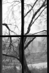 Winter Abstract (Trish Mayo) Tags: winter newyork tree window treesilhouette manhattan soe washingtonheights winterweather oldglass grayday abigfave shieldofexcellence morrisjumelmansion icesleetsnowwehaditall
