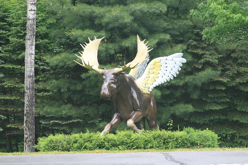 The Great Flying Moose