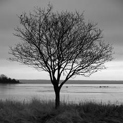 Tree (d.lindholm) Tags: winter blackandwhite bw tree dark sweden lonely kalmar nikon18200mm kalmarsund nikond40x