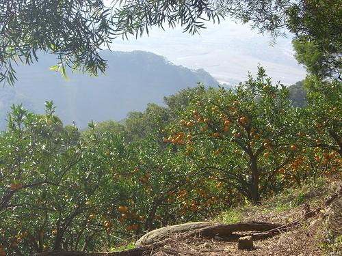 Orange Farms on Fei Feng Mountain side