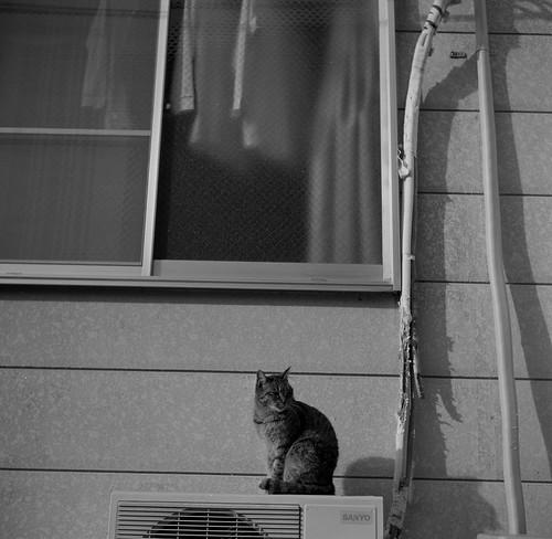 室外機の猫