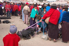 Live animal market in Guamote