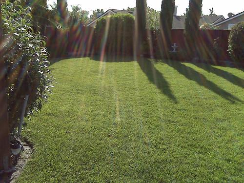 Morning light in the backyard